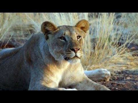 Nat Geo documentary in Hindi ANIMAL FIGHT CLUB Story HD in /Urdu/Hindi