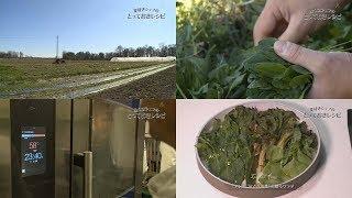 この日、弟子のアンドレアさんと訪れたのは、ミラノ近郊の野菜農家。有...