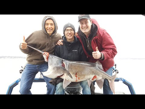 Catching Eight Paddlefish With 62lb Beast - Snagging For Paddlefish / Spoonbill In Oklahoma