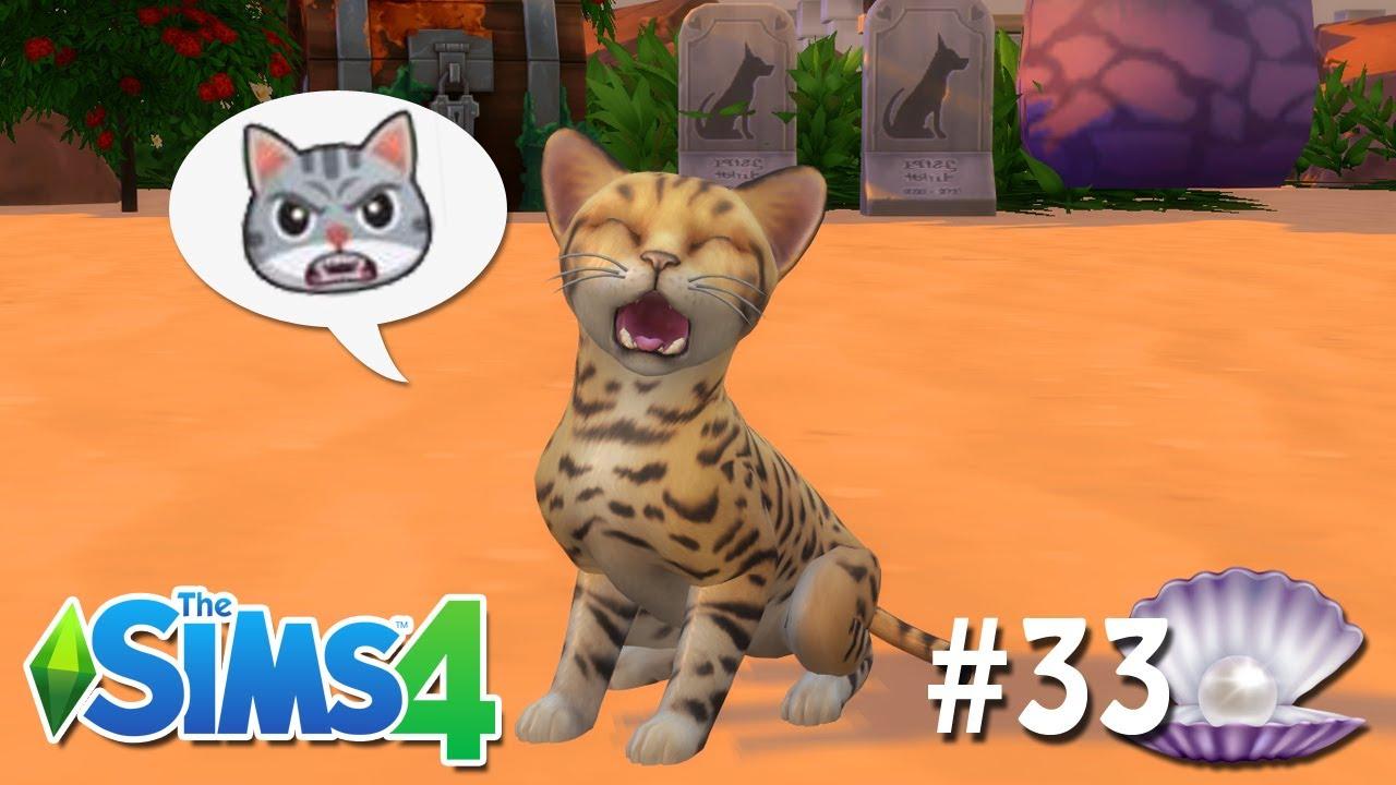 ADOTAMOS UM GATO SELVAGEM #33 - O Futuro de Pérola - The Sims 4
