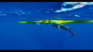 Kayak Fishing, Sailfish number 9, Short movie.