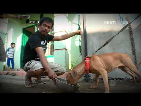 NET24 What to Do Anjing Dilatih Menjadi Anjing Penyelamat