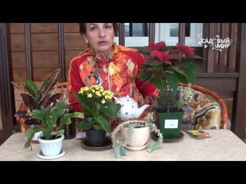 Вопрос: Какие посадить растения на темном и прохладном подоконнике?