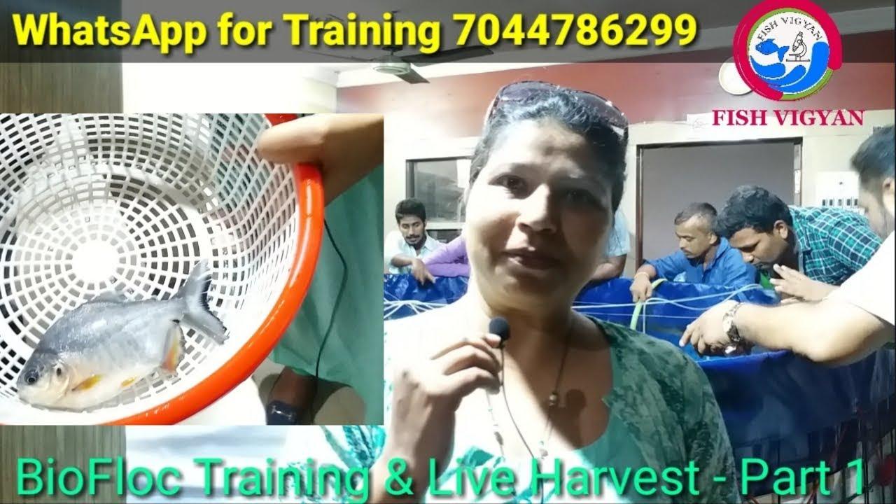 BioFloc fish farming training and live harvest Part-1