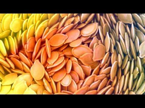 Тыквенные семечки от глистов