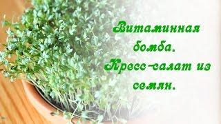 Витаминная бомба. Кресс-салат из семян