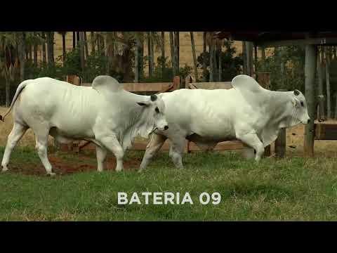 BATERIA 09