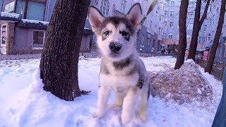 НОВАЯ СОБАКА! щенок первый раз на прогулке