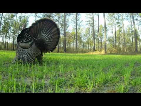 Turkey Hunting Opening Day  March 20, 2021