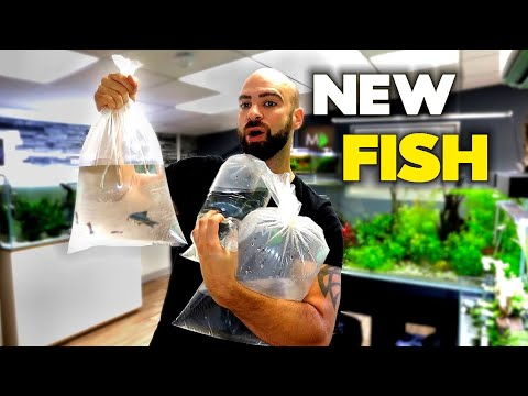 New Fish For Discus & Asian Aquarium | MD Fish Tanks