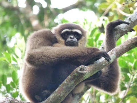 Wildlife of Tanjung Puting National Park, Borneo II - 2015