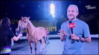 Цирковой конь рисует картины