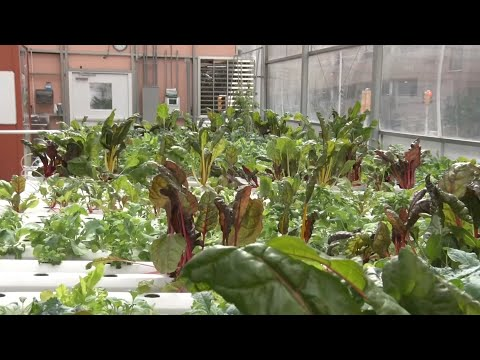 Hospital greenhouse grows healthy food to Newark residents