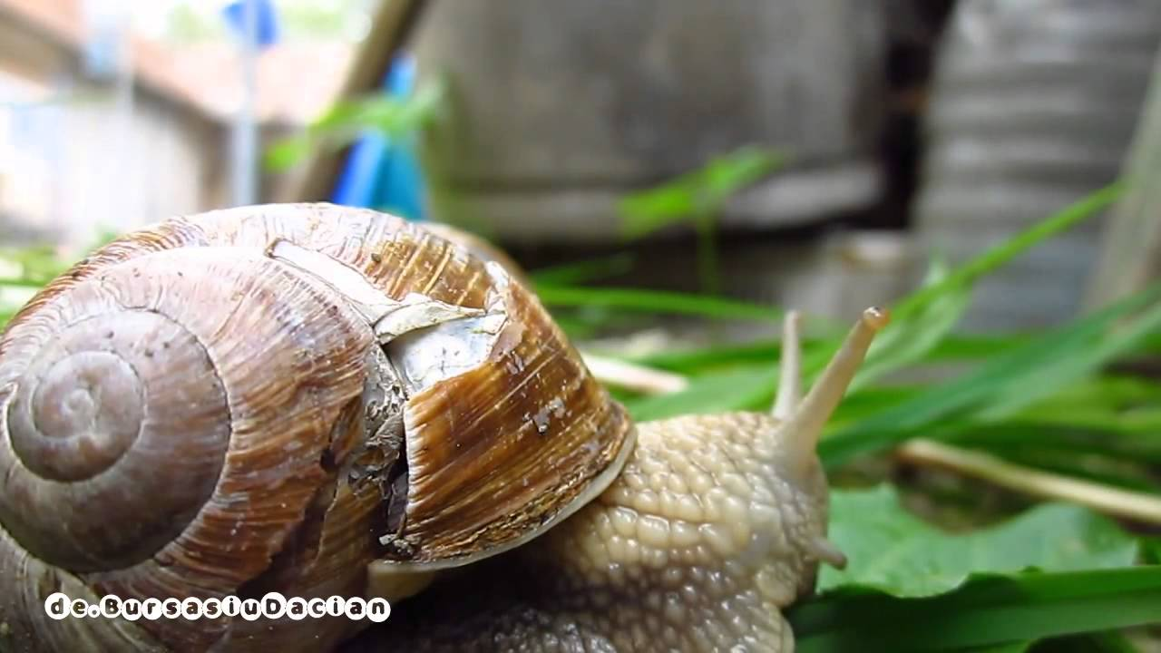 How to Feed a Snail