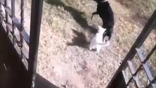 Страшнее кошки - зверя нет. Scary than a cat - there is no beast.