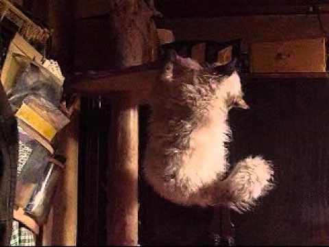 ボサかわいい、かまど。 La Perm CAT