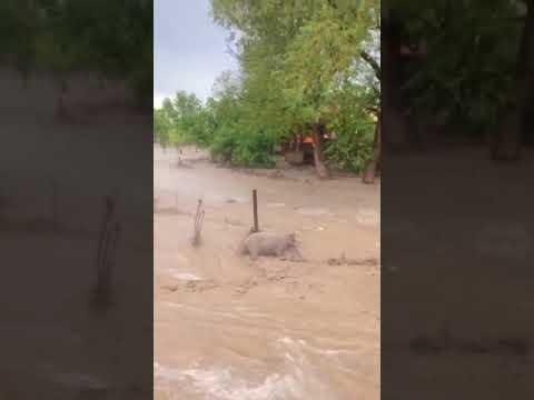 Град и ливень обрушились на некоторые районы Дагестана, жертв и пострадавших нет