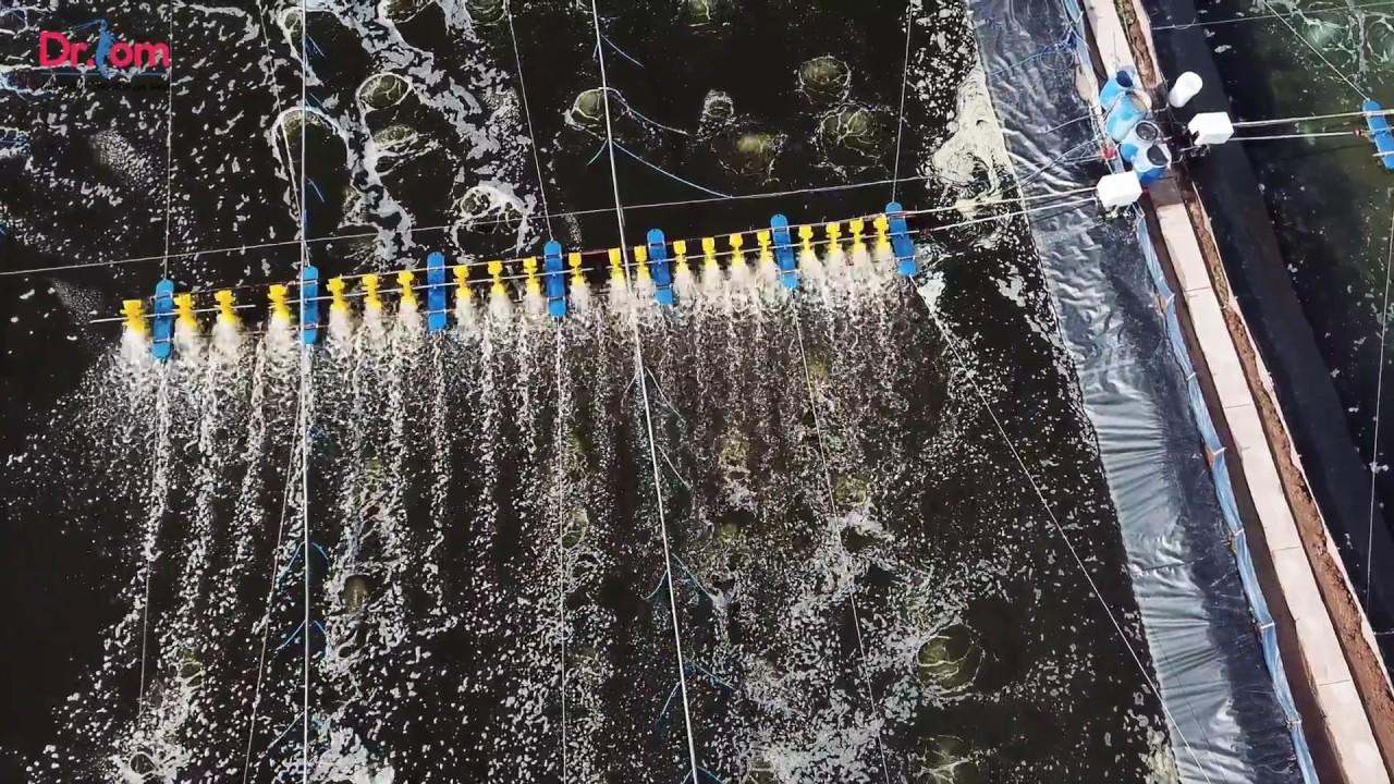 Kết quả hình ảnh cho cách tạo oxy cho nước ao tôm