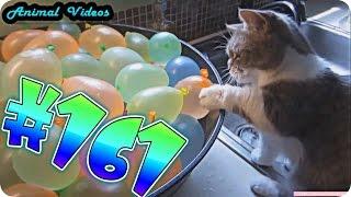 Приколы с животными №161   Кот и шарики с водой  Смешные животные  Animal videos