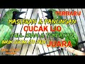 Masteran Cucak Ijo Gacor  Mp3 - Mp4 Download