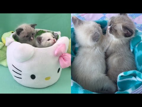 Rescue Two Newborn Kittens Become Super Cute With Amazing Transformation