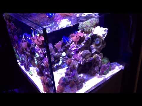 best rimless fish tanks in 2019 reviews fish tank advisor