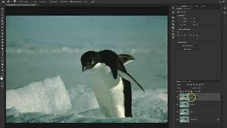 Penguin Restore