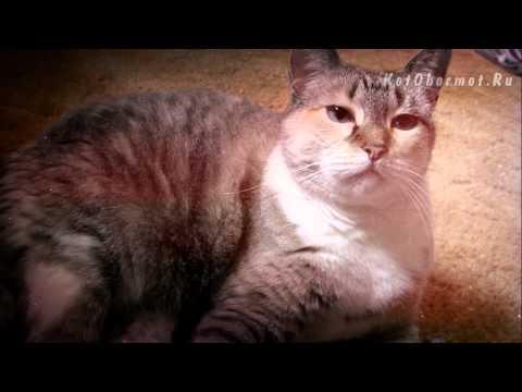 Что делать если кошку рвет? Советы ветеринара