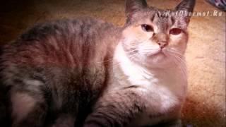 видео Кошку рвет. Рвота у кошки, основные причины, что делать. Советы ветеринара