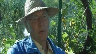 Abeilles: du bétail à miel dans les enclos des colonies humaines02
