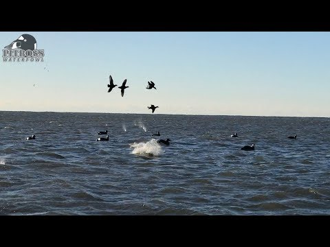 Sea Duck Hunting Shot Of The Day Pitboss Waterfowl Style - Duck Hunting