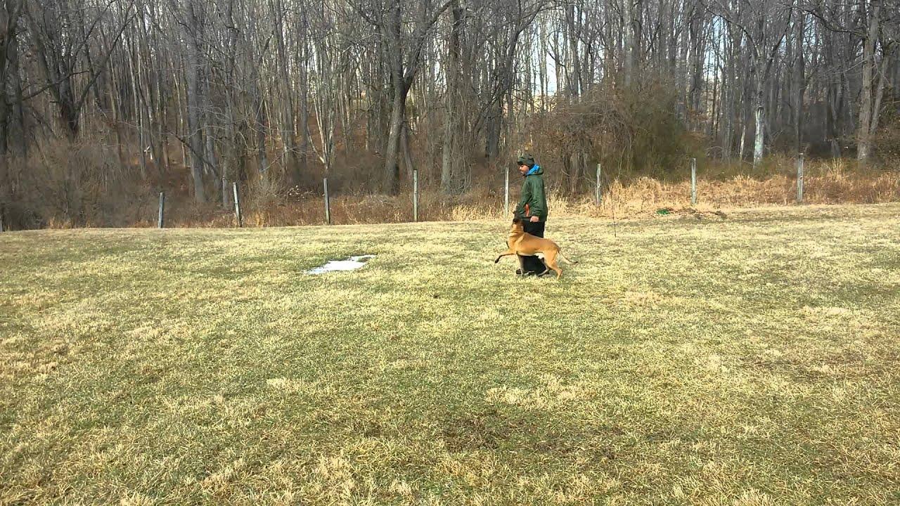Dog Obedience Training Nj