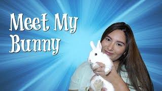Meet My Netherland Dwarf Bunny: Furry Friend