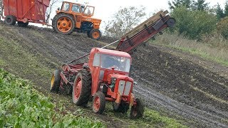 Hill Climbing in The Muddy Fields During Sugar Beet Harvest | Volvo BM320 & Fiat 615  | DK Agri