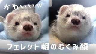 ぐっぽい!みぃ君 - video → https://youtu.be/AAoPKQLY3bM ▻ LINEスタ...