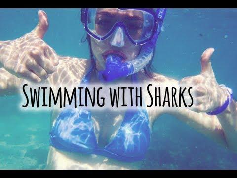 SWIMMING WITH SHARKS !! //  Galapagos, Ecuador
