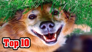 Top 10: Most Popular Dog Breeds (AKC Rankings)