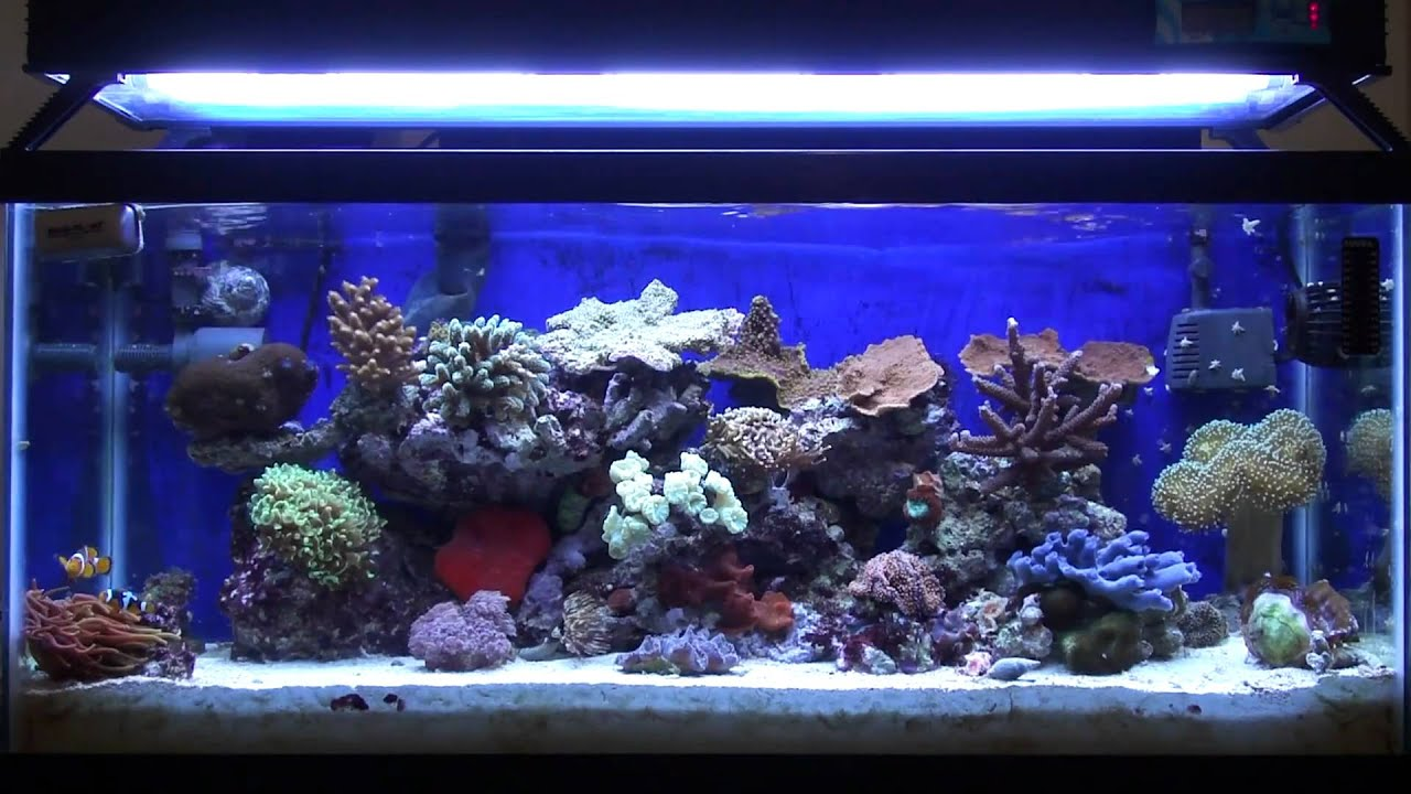 Nano reefs vs larger reef tanks youtube for Reef tank fish