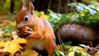Видео-клип на песню 'Осень в лесу!