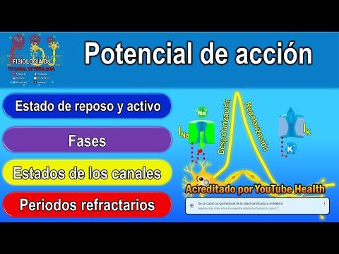 Potencial de acción (resumido)из YouTube · Длительность: 6 мин59 с