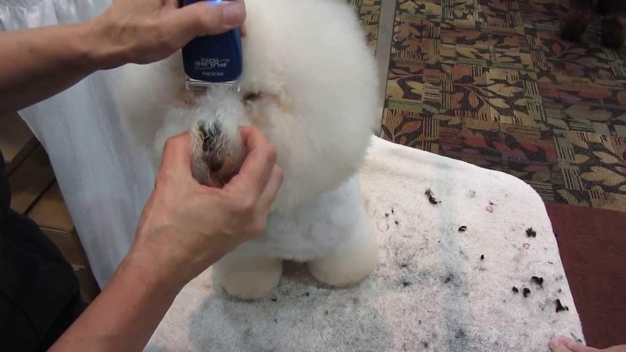 Dog Grooming Bichon Eyes Youtube