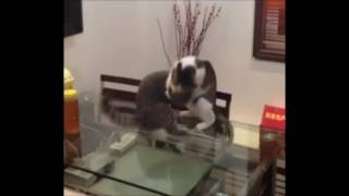 Cat Chokeslam (with Commentary)