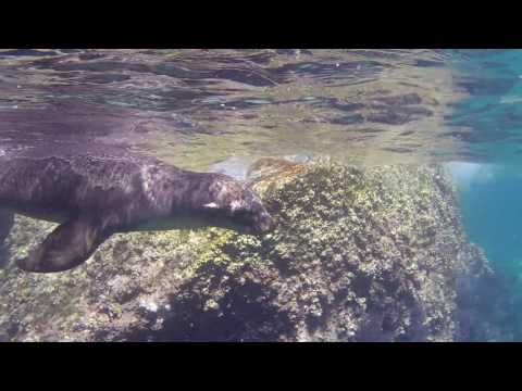 Swimming with Sea Lions in La Paz, Mexico