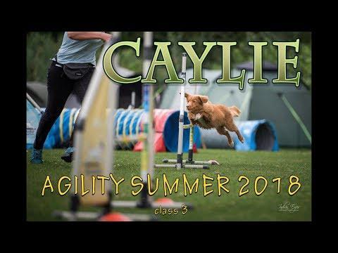 Agility Summer 2018 - Duck Toller Caylie