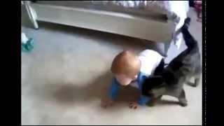 Кот не отходит от ребенка ни на шаг!