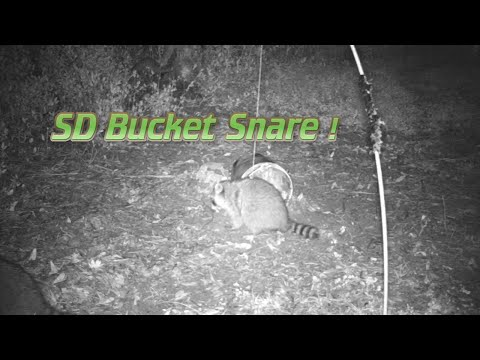 The SD Bucket Snare Trap