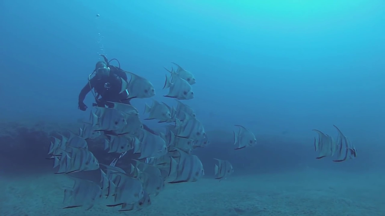 Diving With Scuba Works And Capt Sl8tr Charters Jupiter Fl