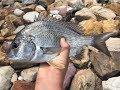 Cooks River 36cm Bream
