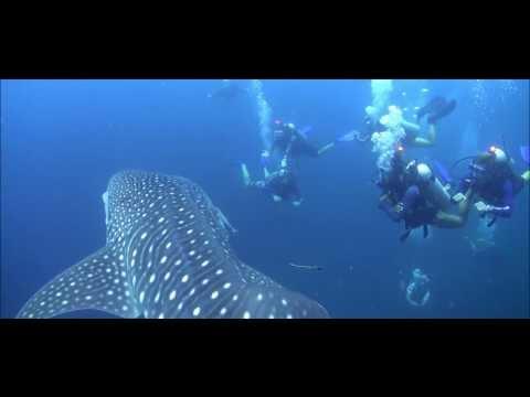 PADI Videos | #LIVETOSCUBA - PADI