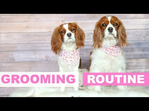 Weekly Dog Grooming Routine How To Tips